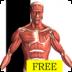 Visual Anatomy Free icon